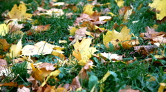 Autumn leaves on grass Stock Footage