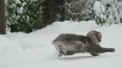 SLOW MOTION: Happy cute longhaired cat playing with fresh snow in snowy garden Stock Footage