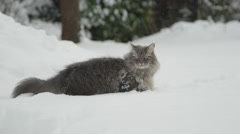 CLOSE UP: Curious grey cat standing in deep fresh snow, staring in the distance Stock Footage