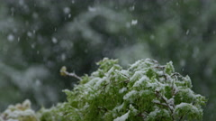 CLOSE UP: Young green tree twig covered with snow in off-season spring snowfall Stock Footage