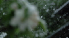 DOF: Flowering tree covered with snow in extreme clod wave and spring snowdrift Stock Footage