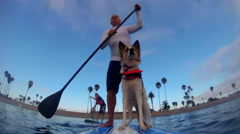 POV of a man, son and his dog paddling an SUP stand-up paddleboard on a lake. Stock Footage