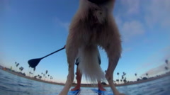 POV of a man and his dog paddling an SUP stand-up paddleboard on a lake. Stock Footage
