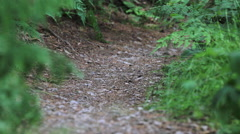 A mountain biker rides on a singletrack trail. Stock Footage