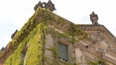 Tilt down shot of ivy facade of an old residential building in Potsdam city Stock Footage