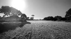 Traveling camera in an empty field bordered by trees. Black and white. Stock Footage