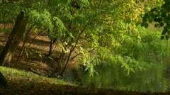 Fresh Green Trees Lake in Forest Windy Day Warm Sunny Autumn Summer Day Ripple Stock Footage