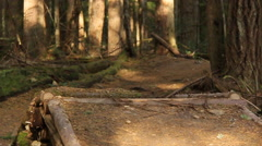 A young man mountain biking on a singletrack wooded trail, slow motion. Stock Footage