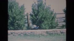 1969: strange sighting in the park COLORADO SPRINGS COLORADO Stock Footage