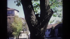 1967: houses around water trees, beautiful and unique view Stock Footage