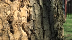 Termite Infestation on a Tree Stock Footage