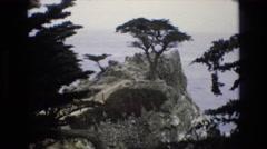 1965: trees on a mountain CENTRAL COAST CALIFORNIA Stock Footage