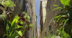 4K Narrow city street with lots of plants in the summertime. No people.  Stock Footage
