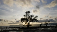 4K Timelapse Mangrove tree with movement cloud at sunset or sunrise time. Stock Footage