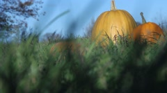 Someone Looks at a Pumpkin in the Grass. Tucked Away in the Grass. Mystic. Stock Footage
