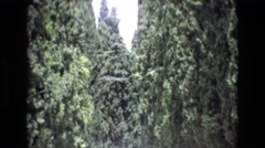 1969: when trees try to take over the highway. SPAIN Stock Footage