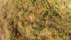 Man hiking on mossy mountain ground revealing mighty fjord valley landscape Stock Footage