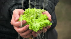 Water flows on lettuce leaves in ands of man Stock Footage