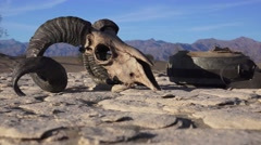 Life and death in Death Valley, zoom out Stock Footage