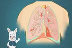 Lungs - Blue Background - rabbit Stock Footage