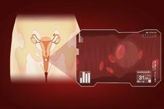 Vagina - Blood Stream - Vector Animation - Blood Circulation - Zoom Analysis  Stock Footage