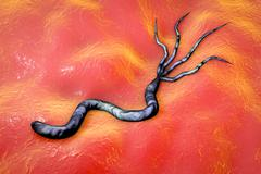 Helicobacter pylori bacterium Stock Illustration