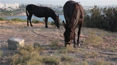 Two horse grazing on the shores of the sea Stock Footage