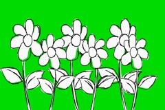 Six Flowers Growing- Animation - Hand-Drawn - Green Screen - Loop Stock Footage