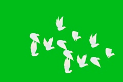 White Birds Fly - Animation - Hand-Drawn - Green Screen - Loop Stock Footage