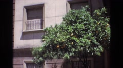 1972: short tree with green rich leaves and yellow ripened fruits  Stock Footage
