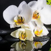 Beautiful spa setting of white orchid (phalaenopsis), green branch of fern, z Stock Photos