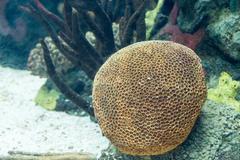 Underwater colored actinia in aquarium Stock Photos
