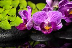 Spa still life of violet orchid (phalaenopsis), green branch of maidenhair, z Stock Photos
