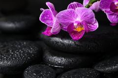 Spa concept of beautiful lilac stripped orchid (phalaenopsis) and zen stones  Stock Photos