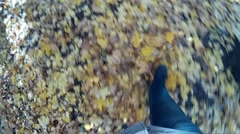 A man is walking in the autumn forest Stock Footage