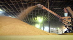 Granary. Storing Wheat. Working Machine Pouring Grains Into Huge Heap. Cereal Stock Footage