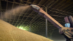 Countryside. Granary. Storing Wheat. Working Equipment Pouring Grains . Heap of Stock Footage