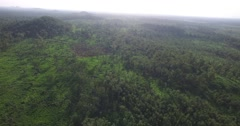 Aerial shot over rainforest Asia Stock Footage