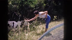 1961: woman pets a cow HAWAII Stock Footage