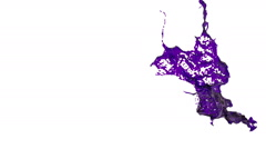 In slow motion purple splash in the air. dyed oil Stock Footage