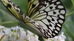 Butterflies in nature Stock Footage