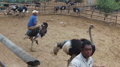 Jockey riding ostrich Stock Footage