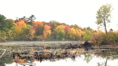 Fall colours in Canada Stock Footage