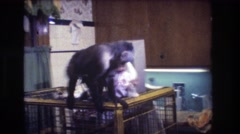 1973: a monkey circle's around the top of his cage, as a baby looks on. MEDFORD Stock Footage