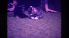 1973: kittens playing on the floors. MEDFORD NEW JERSEY Stock Footage
