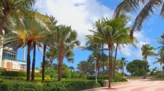 Miami Beach palm trees and condominiums Stock Footage
