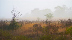 Field in the fog outside the city in the early morning Stock Footage
