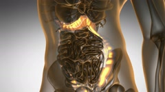 Science anatomy scan of human colon glowing with yellow Stock Footage