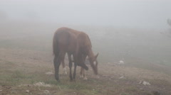 Horses in a field in the fog Stock Footage