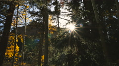 Sun star Lens flare peek through pine and aspen trees Stock Footage